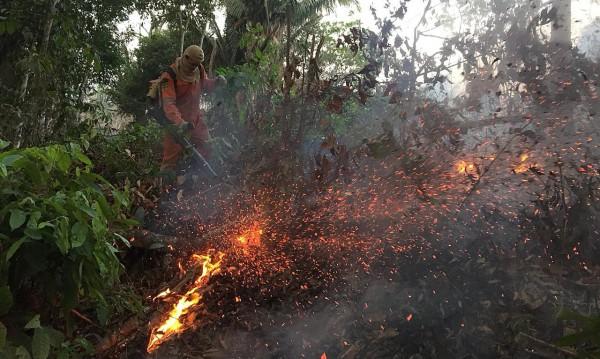 Най-мощните пожари от 13 години насам бушуват в Амазония