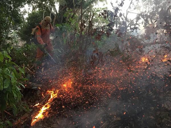 През юни пожарите в бразилската част на Амазонската екваториална гора