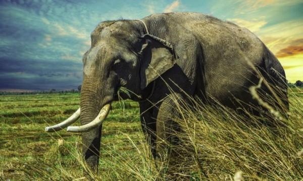 Стотици слонове умират загадъчно в Боствана