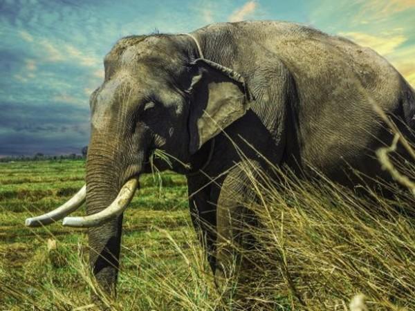Ботсвана разследва стотици необясними смъртни случаи на слонове. От май