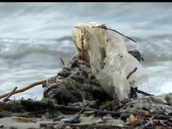 Първите плаващи острови от пластмасови боклуци в Черно море вече