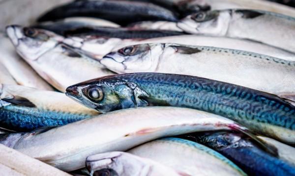 Стотици килограми умряла риба се появи по бреговете на Янтра