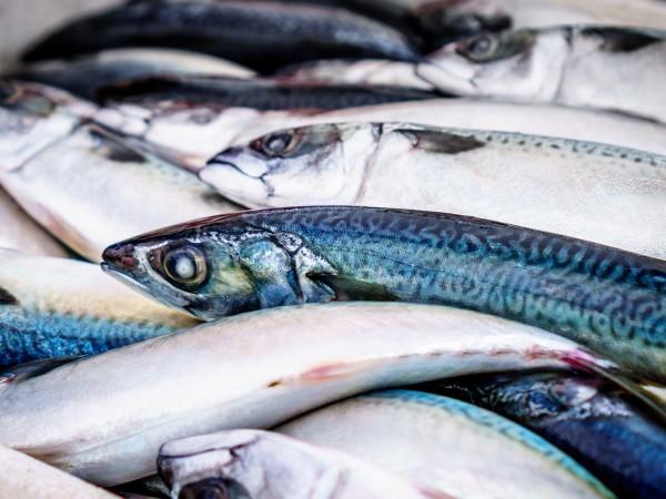Стотици килограми мъртва риба изплуваха от река Янтра край горнооряховското
