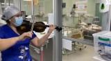 В Чили борят коронавируса с... цигулка