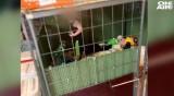 Ужас в САЩ: Спасиха бебе, държано в клетка със змии