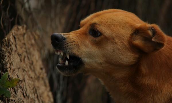 Кучета нападнаха мъж от с. Логодаж