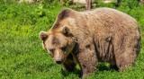 Откриха труп на мечка във велинградско