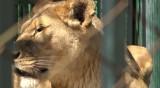 Новородени животни изчезват в зоопарка в Благоевград