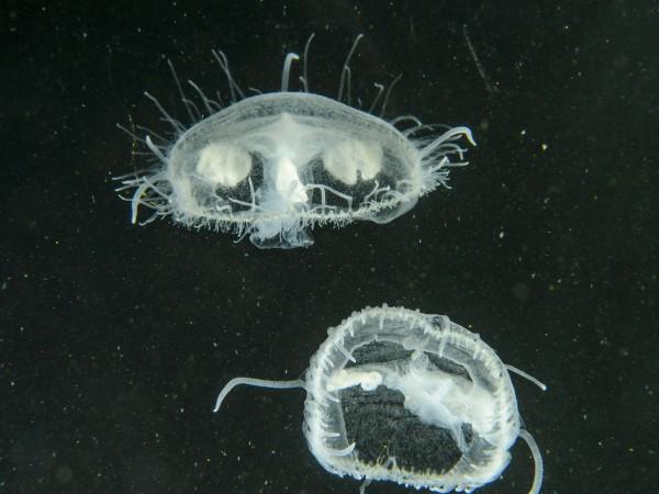 Според ново глобално проучване инвазивните видове може да са причина