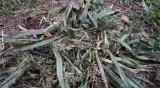 Оплакване в HelpBook: Наред с тревата, фирма окоси цветята и храстите ни