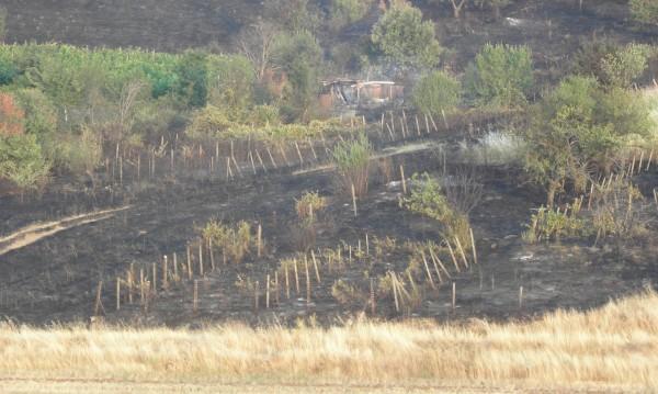 По-малко горски пожари през тази година
