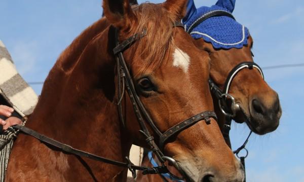 Откриха 2 застреляни коня край козлодуйско село