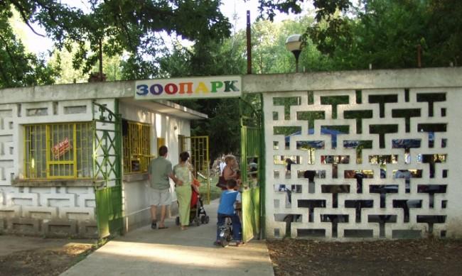 Кенгуру-албинос е най-новият обитател на зоокъта в Павликени