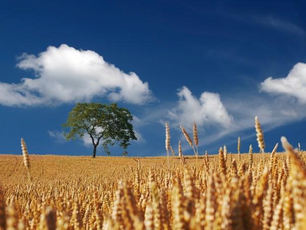Българската асоциация на собствениците на земеделски земи (БАСЗЗ) изразява категоричното