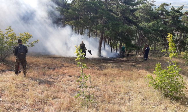 Нов горски пожар бушува в Хасковско
