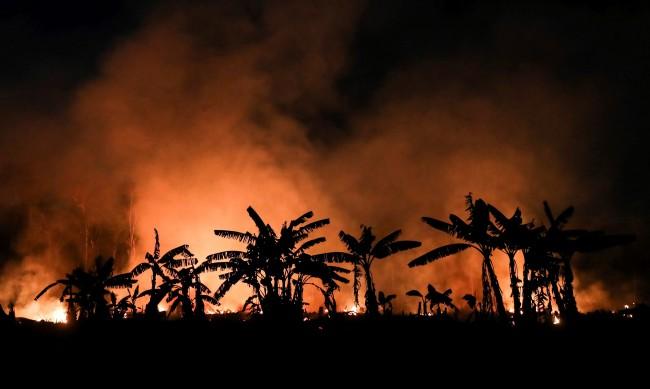 Ръст на горските пожари в амазонската джунгла в Бразилия