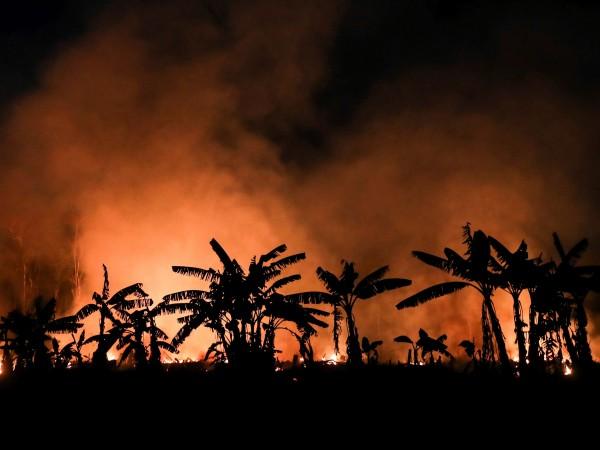 Пожарите в амазонската джунгла в Бразилия са се увеличи като