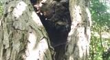 От Helpbook: Агресивна овчарка, опасно дърво, недобросъвестни шофьори