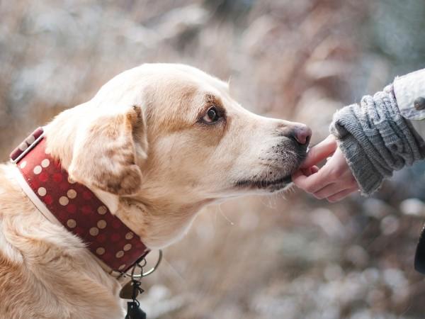 """През юли 101 кучета от приютите на """"Екоравновесие"""" са намерили"""