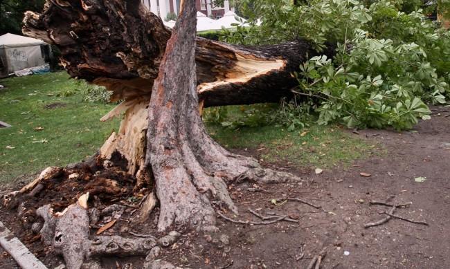 Дърво се стовари на булевард в Благоевград, по чудо няма ранени