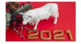 2021 - Какво да очакваме в Годината на белия метален Вол?