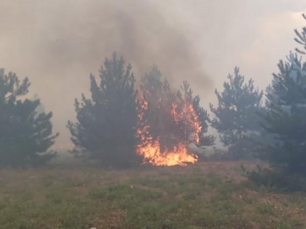 Пожар обхвана над 1000 декара сухи треви и иглолистна гора