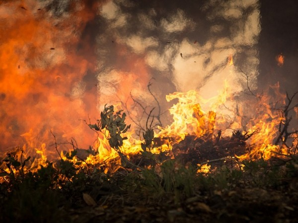 В 13 области в страната има повишен риск от пожари.