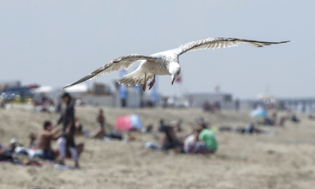 Бой на плажа между туристи и полиция, Белгия забрани еднодневните екскурзии
