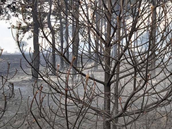 Нови два пожара от този следобед са ангажирали силите на