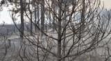Около 50 хил. дка са засегнати от пожарите в Хасковско