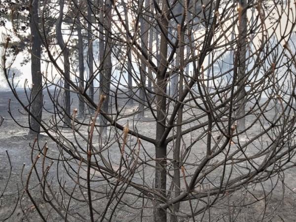 Всички пожари в област Хасково са потушени. Това съобщи областният