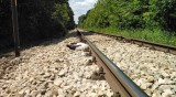 12 мъртви щъркела открити край жп линията Русе - Варна