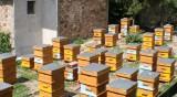 Пчелари настояват за субсидии заради слаба реколта от мед