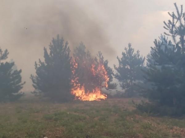 Тази вечер пламна поле и гора край хасковското село Нова