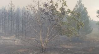 Пожарът до хасковското село Нова Надежда е овладян