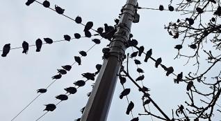 Защитени птици са загинали при ремонтни дейности в Казанлък