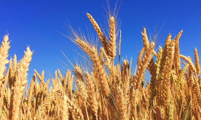 Земеделието в криза, от 20 г. не е имало толкова тежка стопанска година