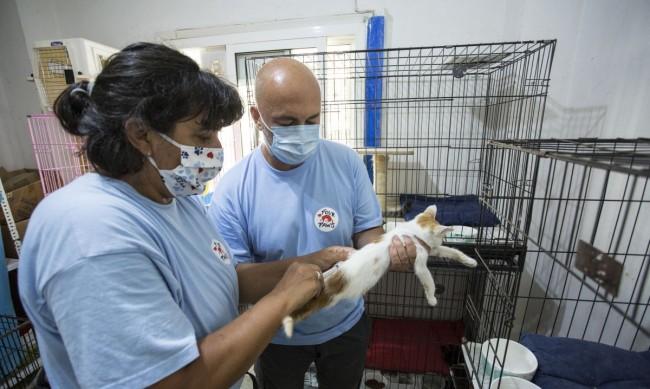 """Български екип от """"Четири лапи"""" спасява животни в Бейрут"""