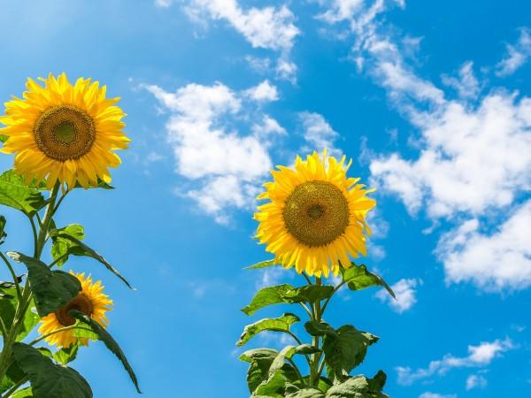 Времето днес ще бъде слънчево. В следобедните часове може да