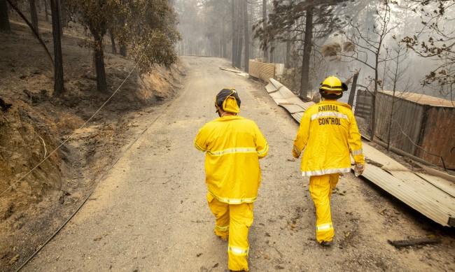 Горските пожари в САЩ продължават взимат жертви
