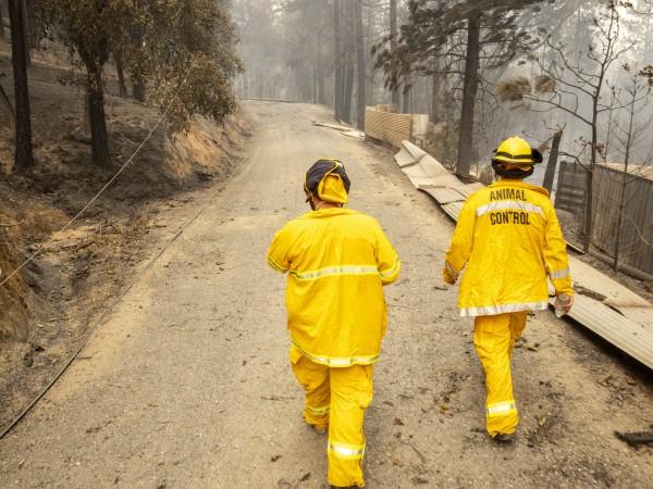 Десетки големи пожари, които са подсилвани от вятъра, продължиха да