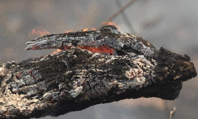 Пожари в Пантанал - най-големите тресавища в света
