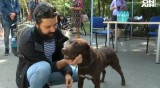 Кучета от общинския приют в Бургас откриха своите нови стопани
