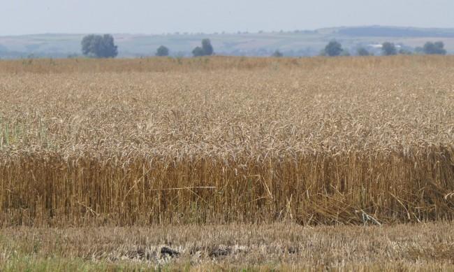 Варненски бизнесмен присвоявал зърно, получи 8 г. затвор