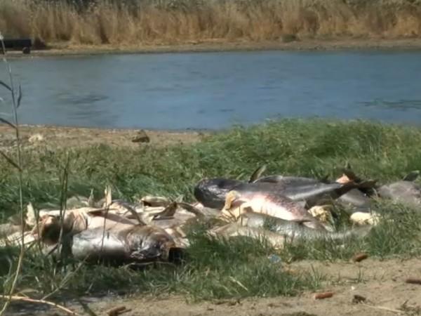 Сигнал за огромно количество умряла риба в язовир край Черноморец.