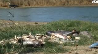 Сигнал за огромно количество мъртва риба в язовир край Черноморец