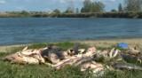 Високи нива на амониев азот в стотиците мъртви риби край Черноморец