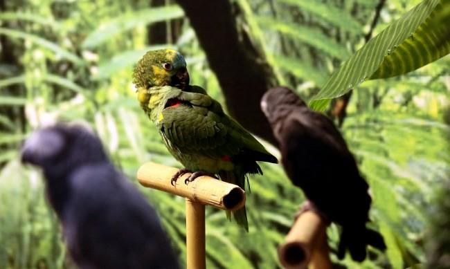 Изолираха папагали в британски зоопарк, псували посетителите