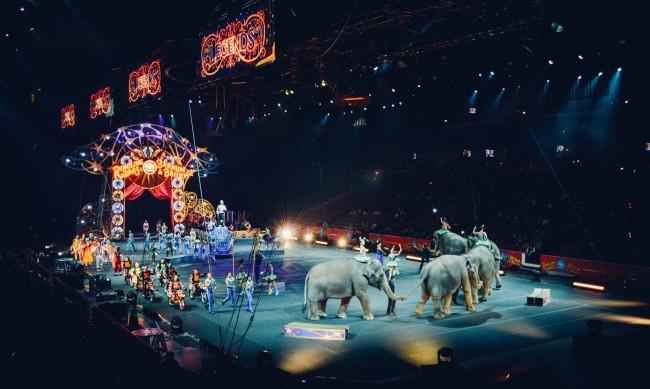 Франция забрани диви животни в пътуващите циркове