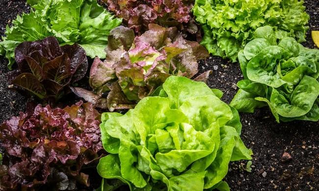 Продукцията на биопроизводителите у нас в застой заради коронакризата